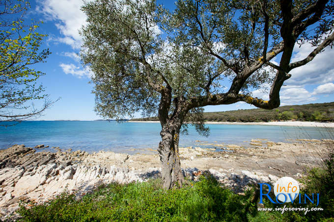 Beaches in Rovinj: Bay Cisterna / Bay Bacvice 2