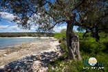 Beaches in Rovinj: Bay Cisterna / Bay Bacvice 8